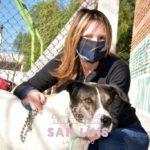 Zoonosis realizó la castración gratuita de más de 1220 mascotas