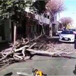 Defensa Civil trabajó en la remoción de dos árboles que cayeron en el centro de la Ciudad