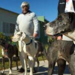 Convocan a propietarios de perros potencialmente peligrosos para que los integren al registro municipal